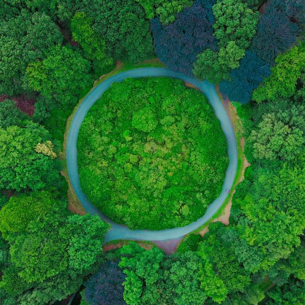 Green, air view of a circle in trees.
