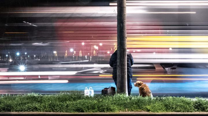 A man with a dog staring at the blur of city lights. He wonders where it all went wrong.